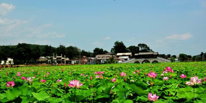 丹凤县举办2019年全域旅游暨旅游扶贫培训会