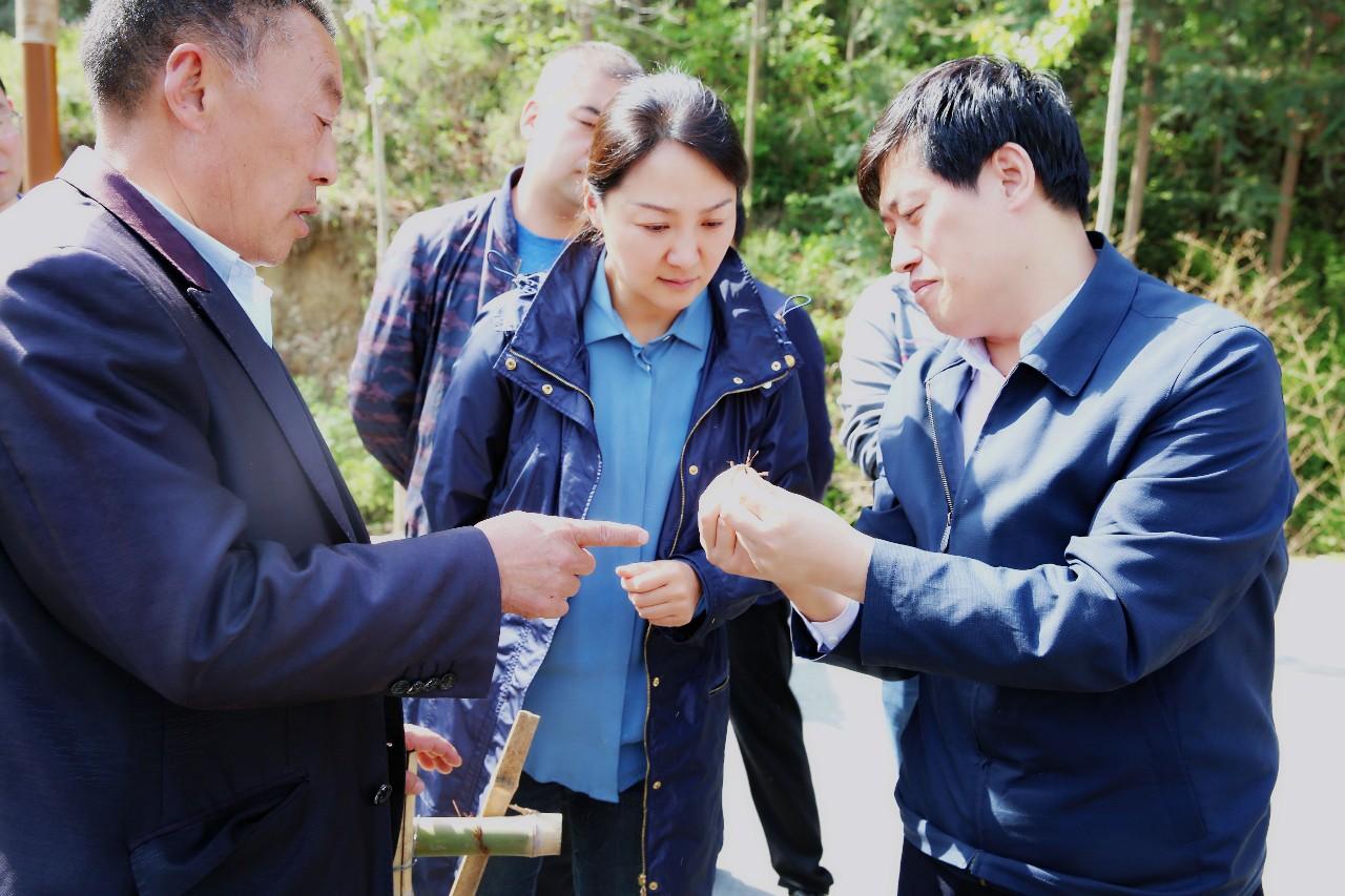 县委书记郑晓燕检查指导武关镇毛坪村脱贫攻坚工作